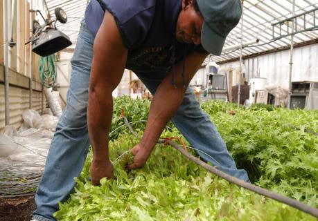 450 tona hrane na 3 jutara zemlje
