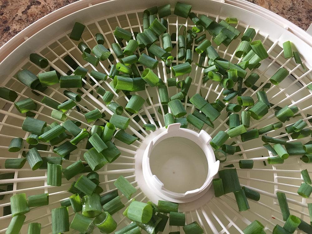 sušenje mladog luka putem dehidratora hrane