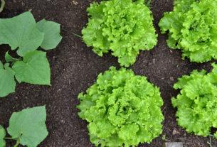 slaganje biljaka u bašti