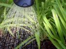 korišćenje sive vode u domaćinstvu